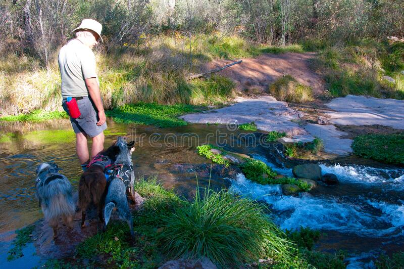 Fossil Springs Wilderness: Springs Area stock photo
