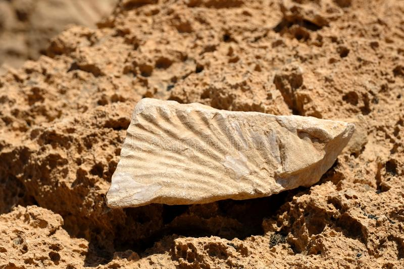 Fossil stone on the rock. Close up of prehistoric fossil found in Negev royalty free stock photos