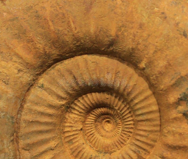 Fossil- textur f?r ammonit arkivfoto