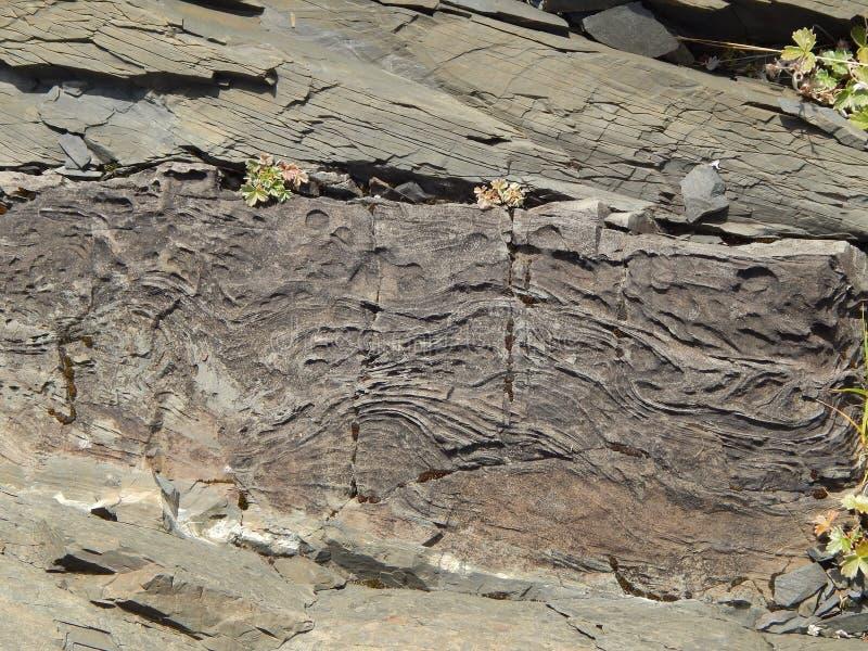 fossil tree bark royalty free stock photos