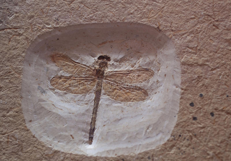 Fossile photographie stock