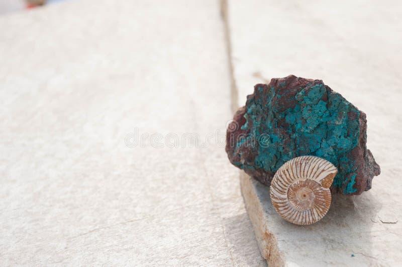 Fossile de coquillage de Nautilus et fond en pierre de Chrysocolla photographie stock libre de droits