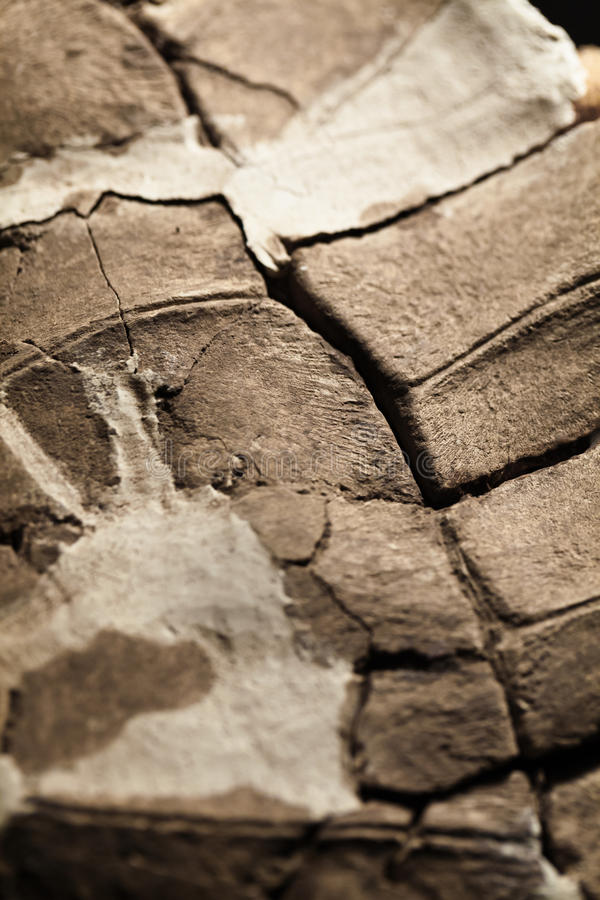 Fossile de coquille de tortue photo stock