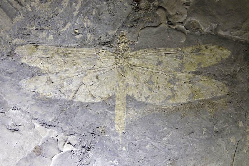 Fossile de libellule image stock