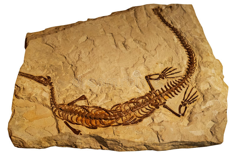 Fossile del rettile antico in roccia fotografie stock