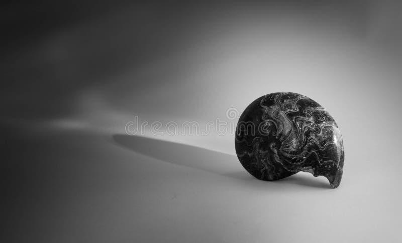 Download Fossile dell'ammonite immagine stock. Immagine di nero - 56889903