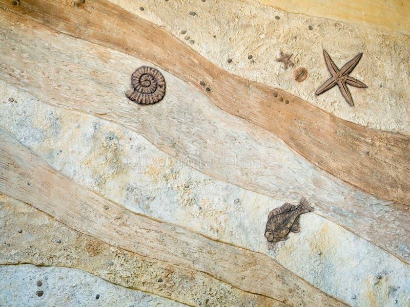 Fossile dell'animale antico nel periodo del dinosauro immagine stock libera da diritti