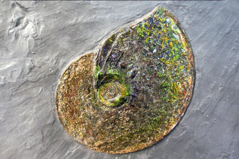 Fossile di Ammolite fotografia stock