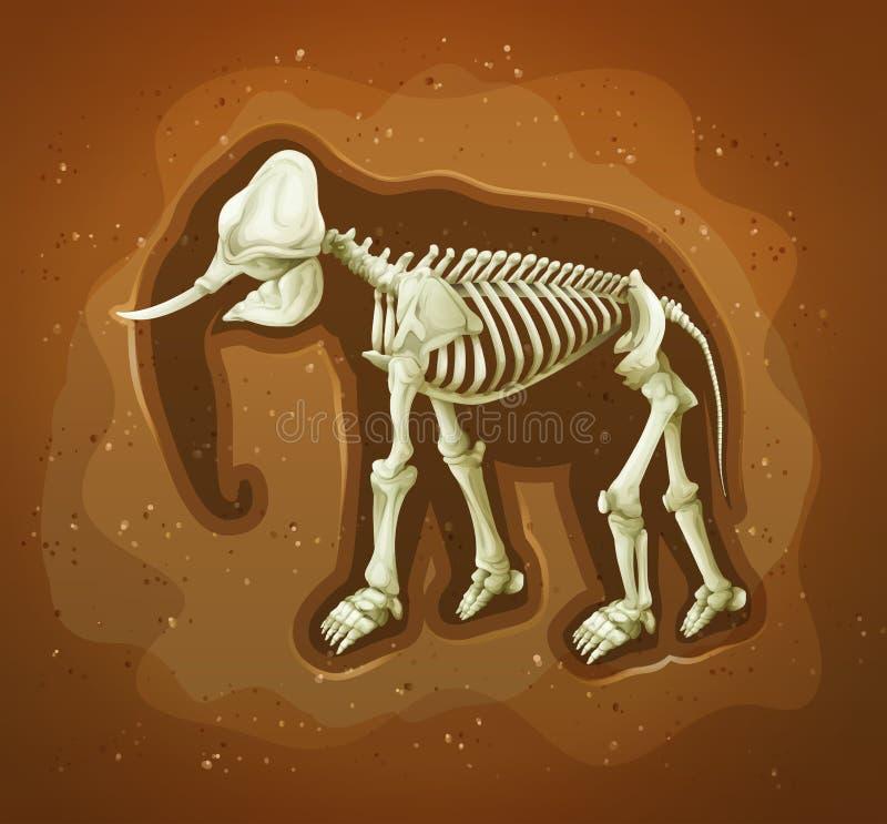 Fossile di un mamoth lanoso royalty illustrazione gratis