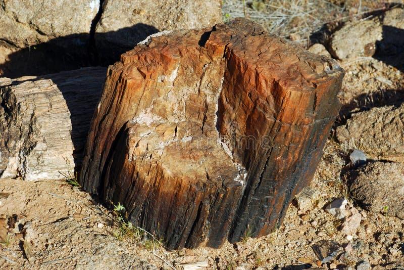 Fossile en bois pétrifié dans la région de Redstone près du Lake Mead, Nevada. photos libres de droits