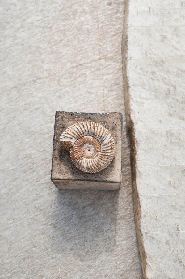 Fossile et place de Nautilus sur le fond en pierre photographie stock