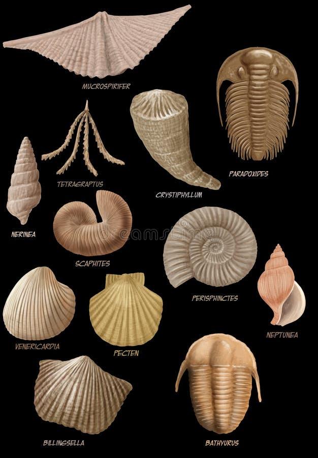 fossiles illustration libre de droits