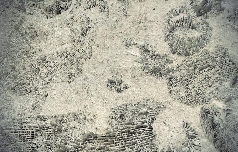Fossili dell'ammonite su una roccia immagini stock libere da diritti