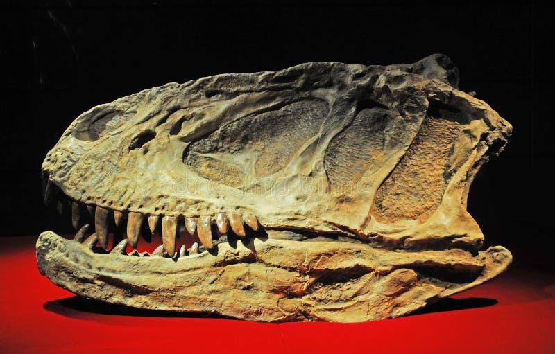 Fossili di dinosauro immagine stock