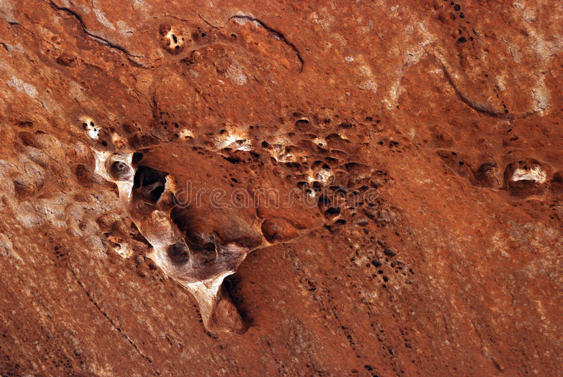 Fossilien im roten Sandstein lizenzfreies stockbild
