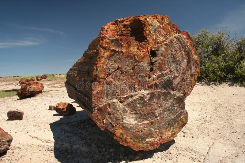 Fossilized δέντρο - πετρώνω δασικό εθνικό πάρκο στοκ φωτογραφίες με δικαίωμα ελεύθερης χρήσης