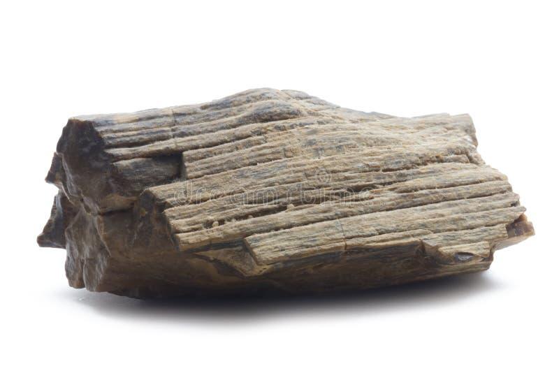 Fossilized drewno obraz royalty free