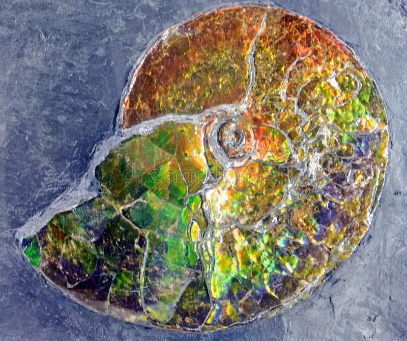 Download Fossilized Iridescence stock image. Image of ammonite - 111878777
