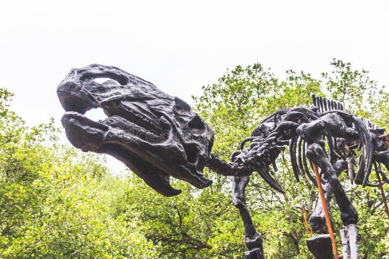 Fossilized kościec dinosaur obraz stock