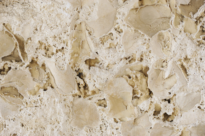 Fossilized leaves. Authentic surface texture of Italian travertine rock with fossilized leaves. Perfect for use as photographic effect when imported as a royalty free stock image