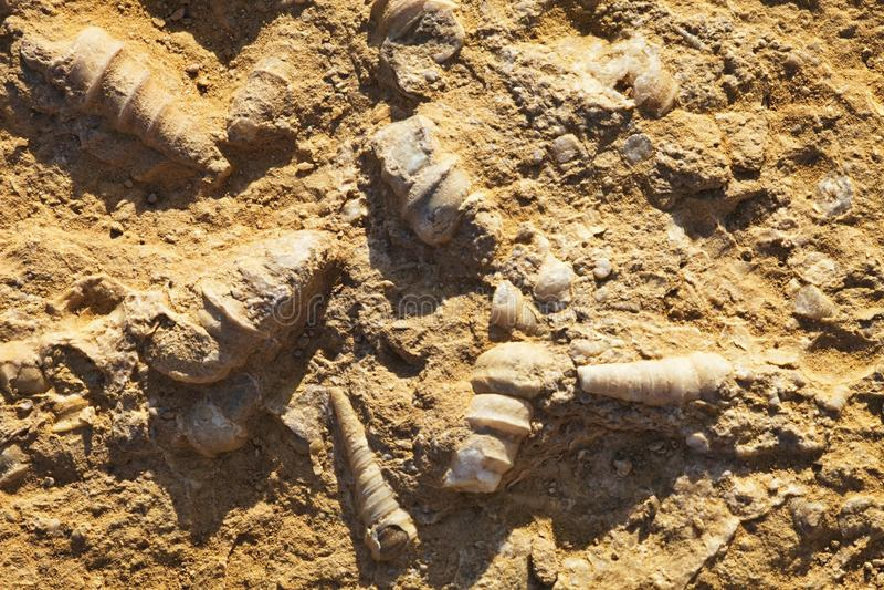 Fossilized skorupy, Paracas, Peru obrazy stock