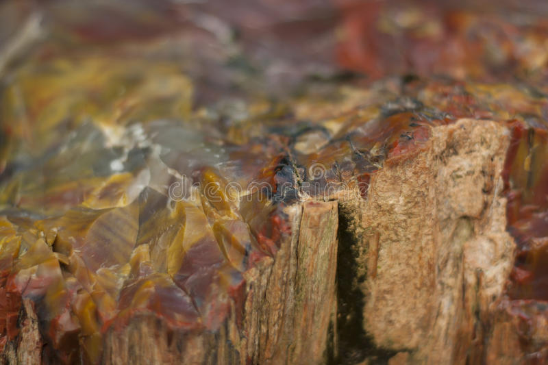 Download Fossilized wood stock photo. Image of exotic, stone, wilderness - 16756626