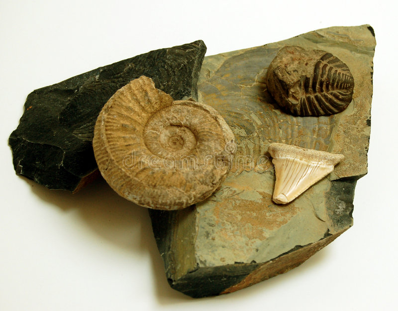Fossils. An assortment of found fossils stock photography
