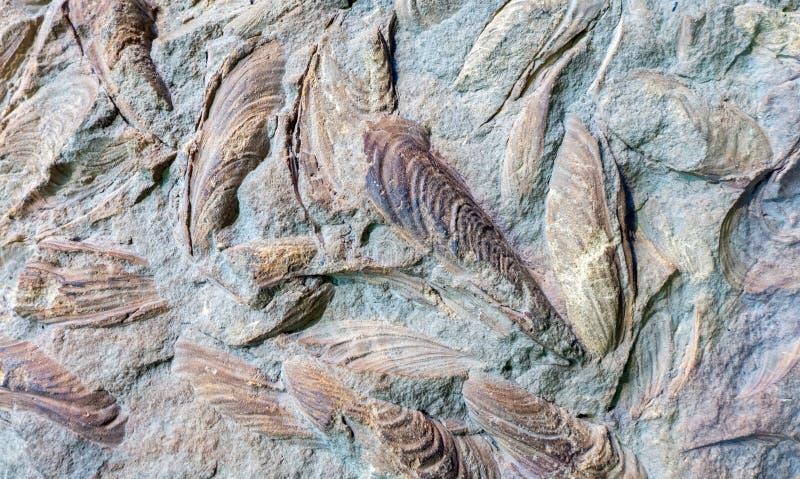 Fossils stock photos