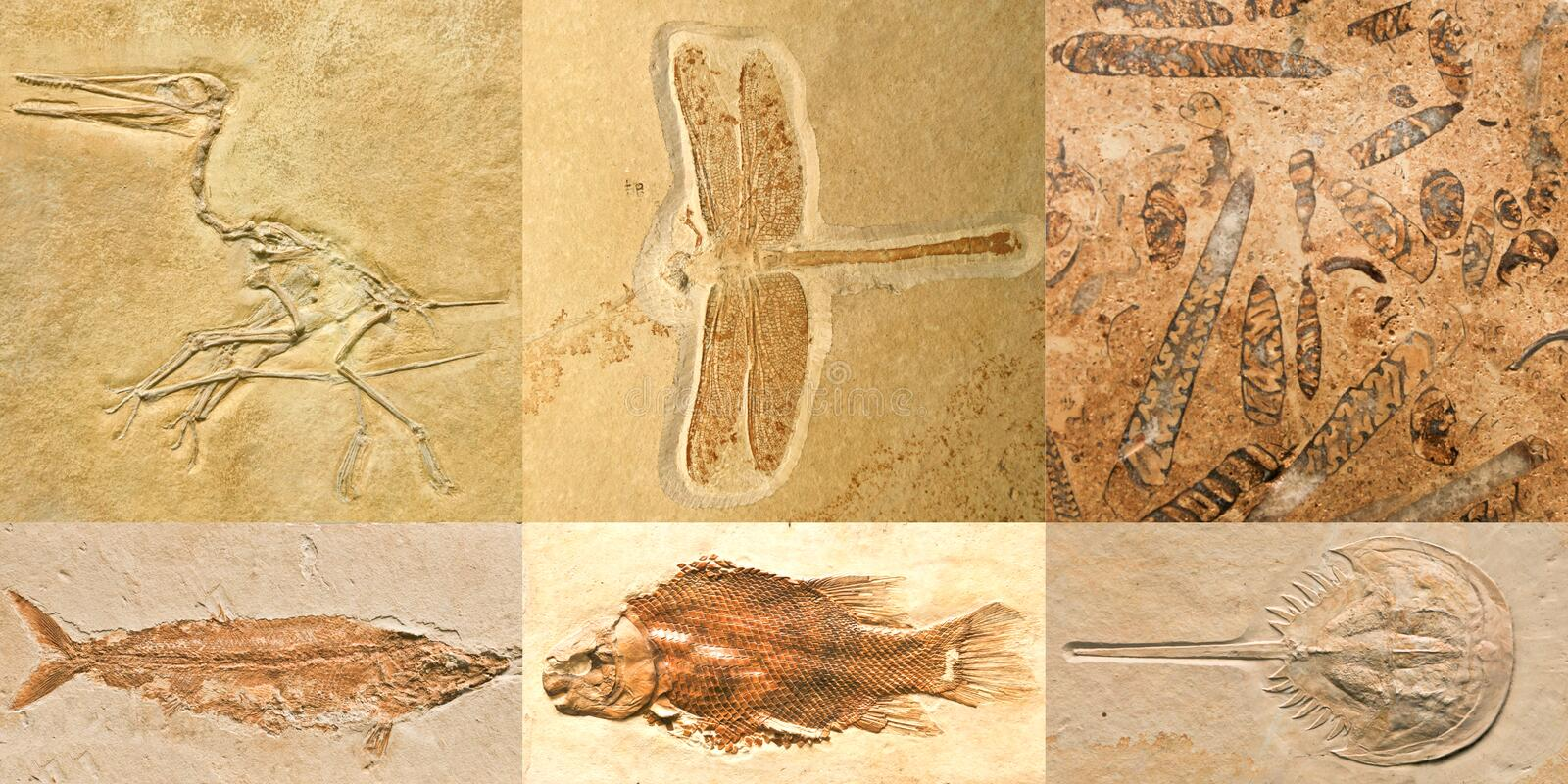 Fossils. Of prehistoric animals: bird, dragonfly, shells, fish and horseshoe crab in limestone royalty free stock image