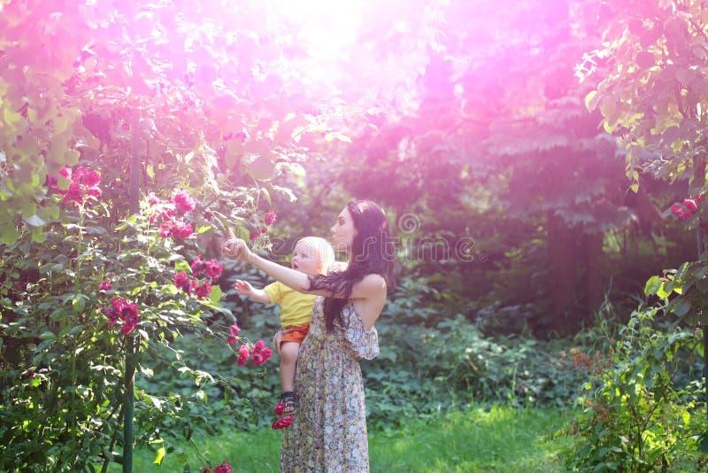 Fostra hållsonen på att blomstra rosor på idyllisk solig dag arkivbilder