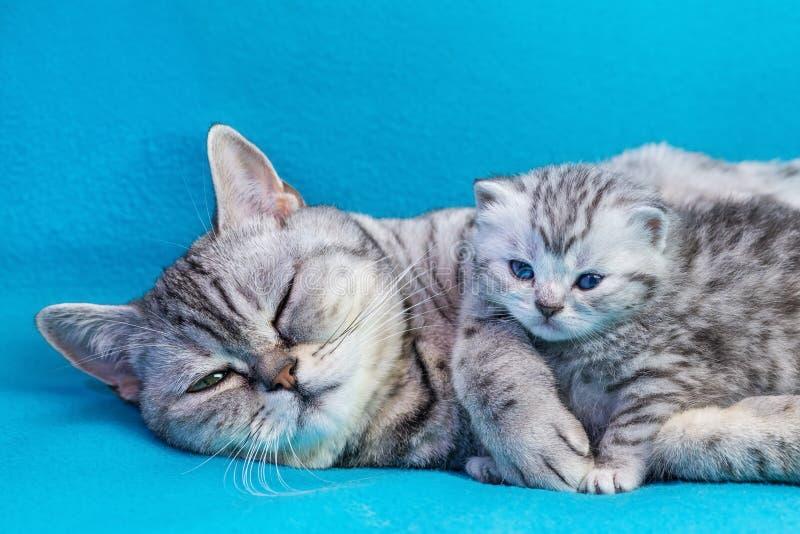 Fostra katten som ligger med kattungen på blåa plagg fotografering för bildbyråer