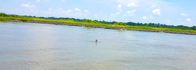 Fostra och behandla som ett barn delfinsimning i Savannah Georgia vatten arkivfoto