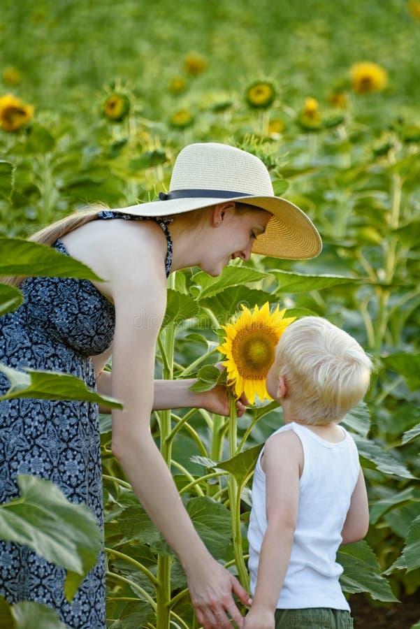 Fostra och behandla som ett barn sonställningen och inhalera doften av solrosen på bakgrunden av ett blommande fält royaltyfria foton