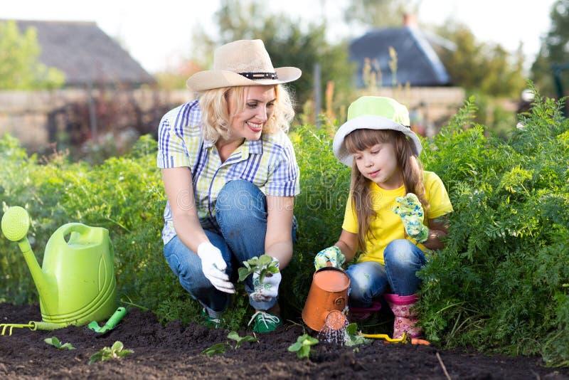Fostra och lura dottern som planterar jordgubbeplantan i en trädgård Liten flicka som bevattnar nya växter royaltyfri fotografi