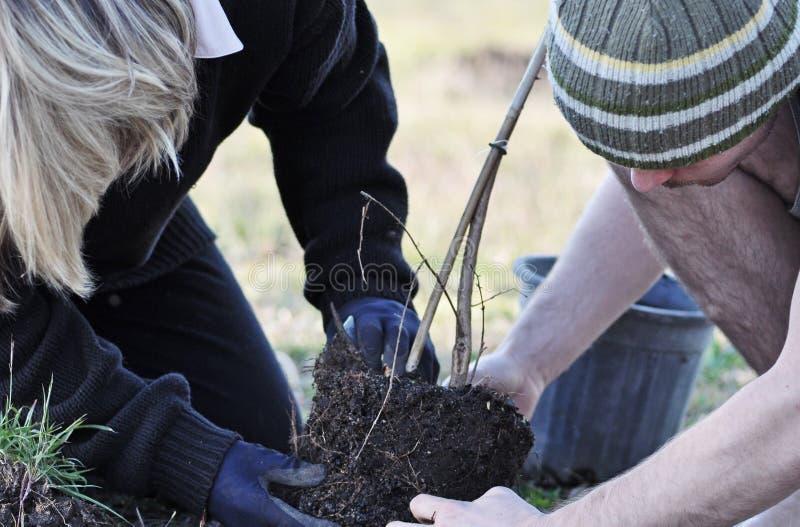 Fostra & sonen som tillsammans planterar en ny ung ou för tree royaltyfri bild