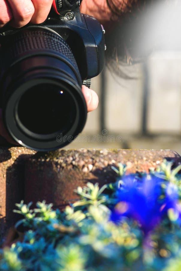 Fotógrafo amador que toma uma imagem no campo de flor imagens de stock