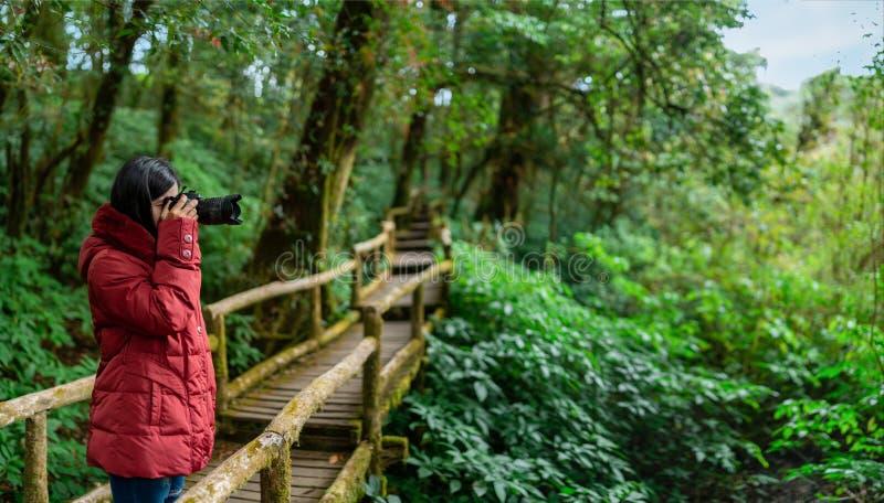 Fot?grafo de las mujeres que toma la foto en bosque de la monta?a de la ma?ana foto de archivo