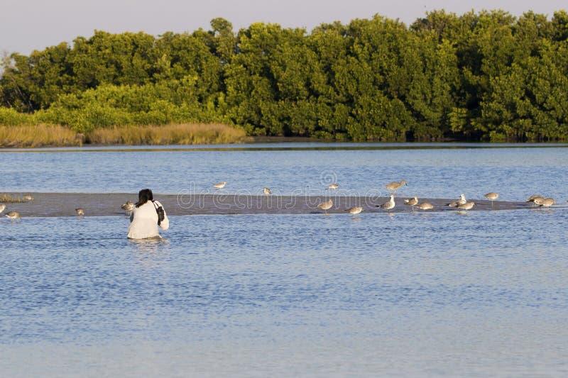 Fotógrafo de sexo femenino que vadea en agua para fotografiar un pájaro de Willet imagen de archivo libre de regalías