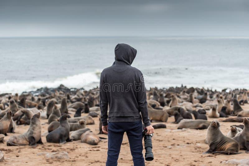 Fotógrafo de sexo masculino de la sudadera con capucha que se coloca sobre los lobos marinos de los diez milésimos adentro imágenes de archivo libres de regalías