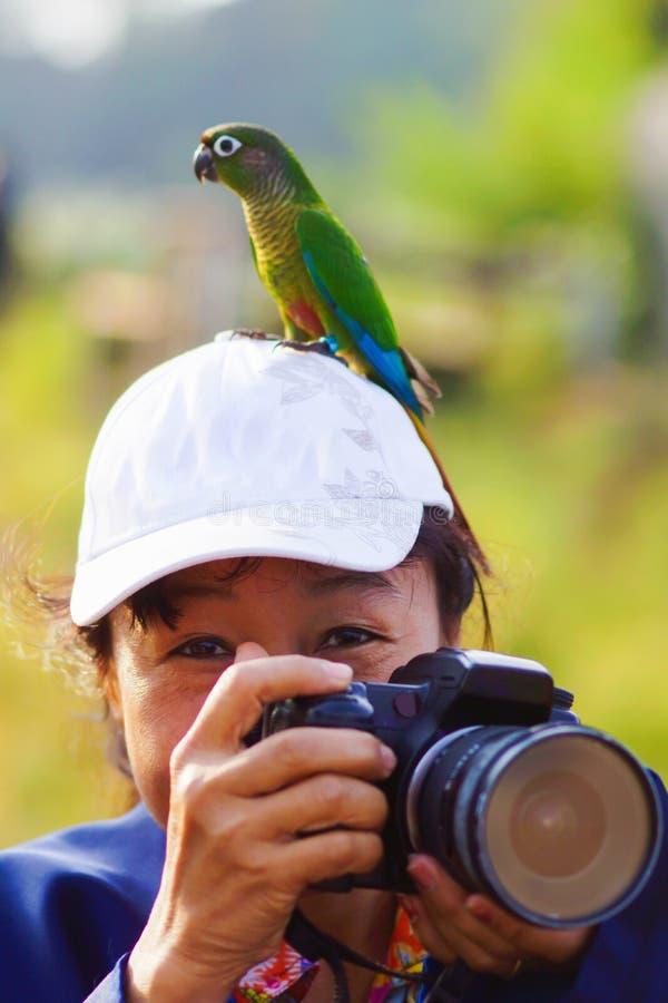 Fotógrafo del pájaro imagen de archivo