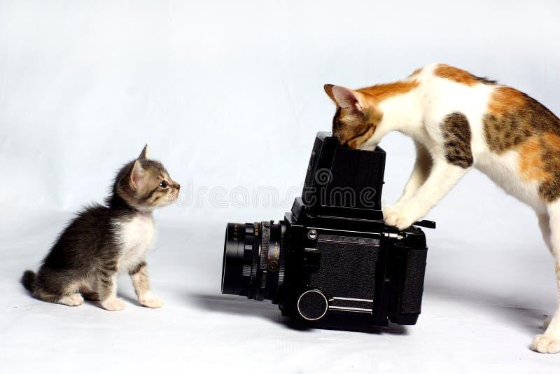 Fotógrafo do gato imagens de stock
