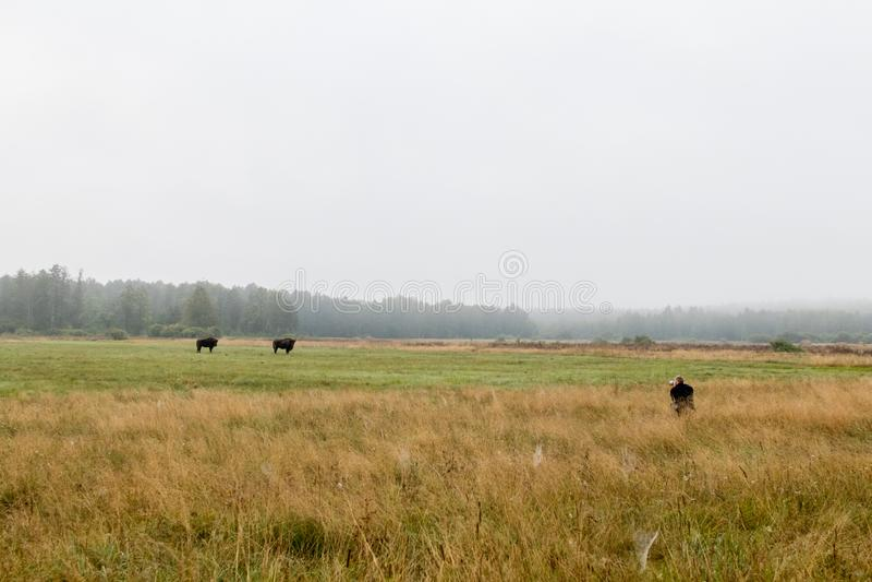 Fotógrafo do naturalista escondido na grama com lente teleobjetiva fotografia de stock royalty free