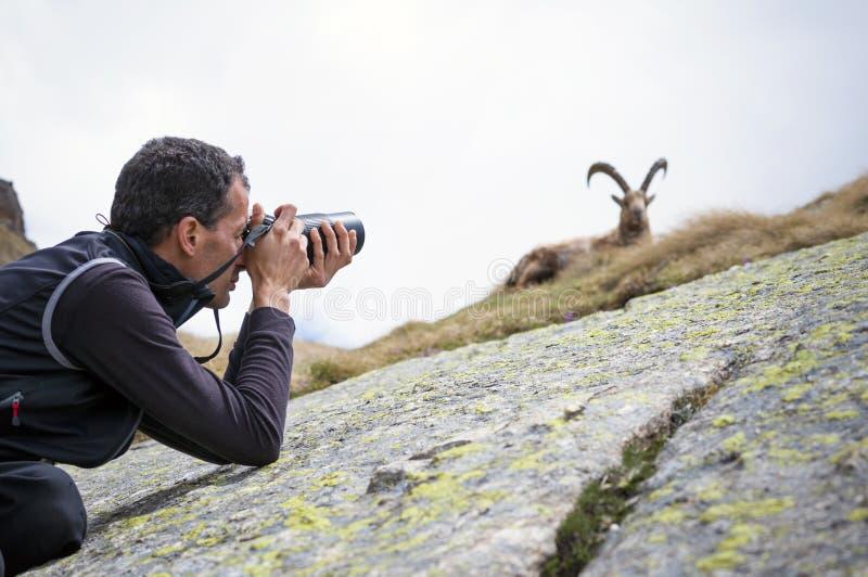 Fotógrafo dos animais selvagens fotos de stock royalty free