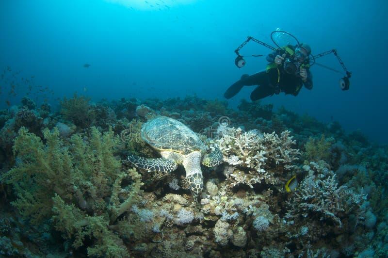 Fotógrafo e tartaruga subaquáticos foto de stock royalty free