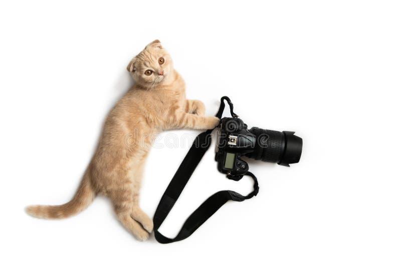 Fotógrafo louco Gato engraçado com a câmera isolada no fundo branco Conceito criativo para o dia da fotografia do mundo, bandeira foto de stock