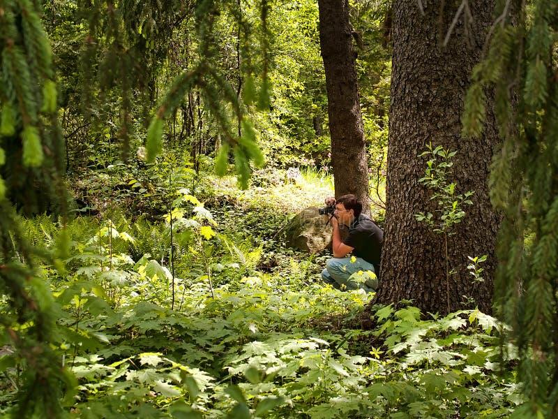 Fotógrafo na floresta imagens de stock