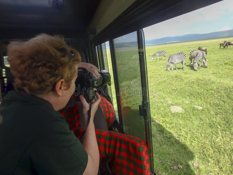 Fotógrafo no safari fotos de stock royalty free
