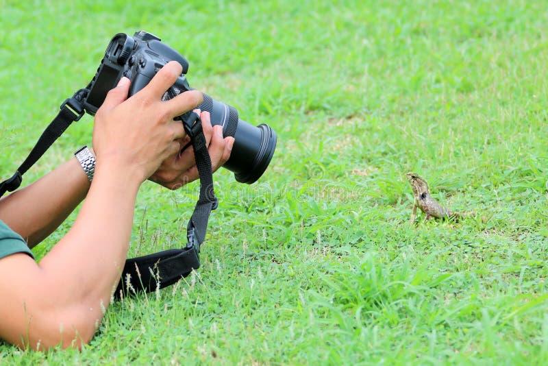 Fotógrafo que miente en la tierra para tomar una imagen del lagarto imagen de archivo