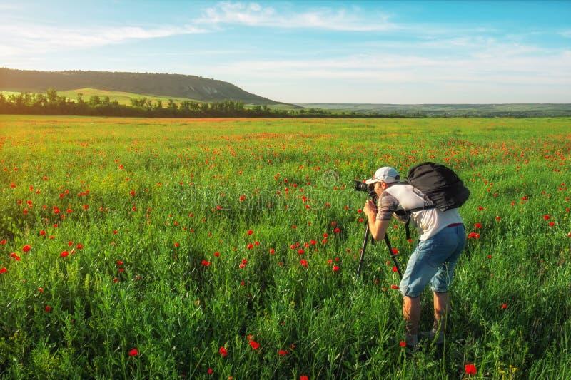 Fotógrafo que toma imágenes del campo con las amapolas fotos de archivo