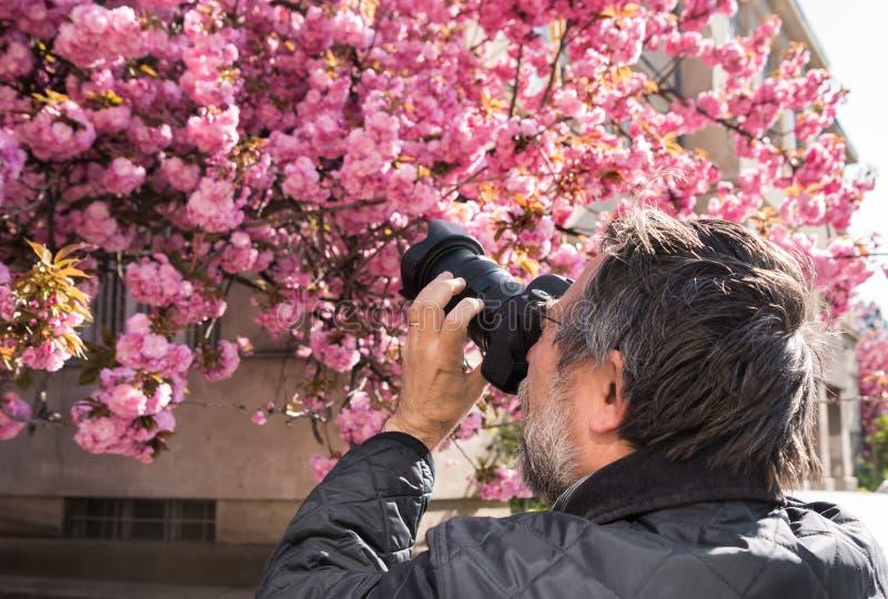 Fot?grafo que toma a imagem da cereja-?rvore japonesa cor-de-rosa no dia de mola ensolarado imagens de stock